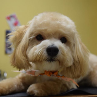 Dog-Gone-Beautiful offers pet grooming services in Charlotte, North Carolina